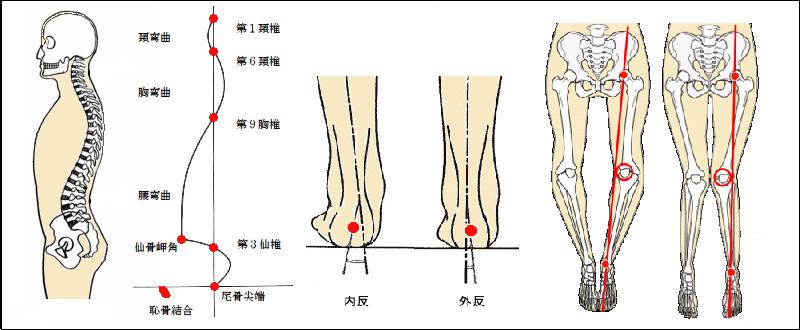 脊柱の湾曲と各関節の骨の位置チェック